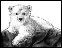 Knut by Amarevia