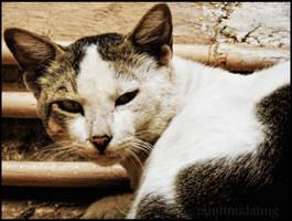 Meow :p by iintimidating