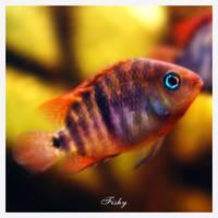 Fish tank by ironicna
