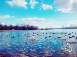 swans tribe