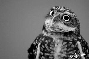 Owl by mcgrath-photography
