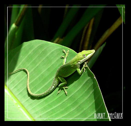 Lizard by MAVnotMagic