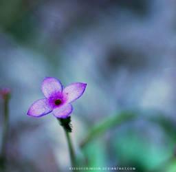 Tiny Bluet by KissofCrimson