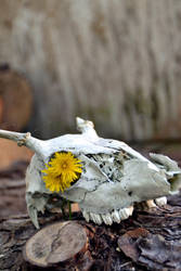 Skull II by KissofCrimson