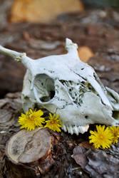 Skull III by KissofCrimson