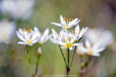 White Flowers by KissofCrimson