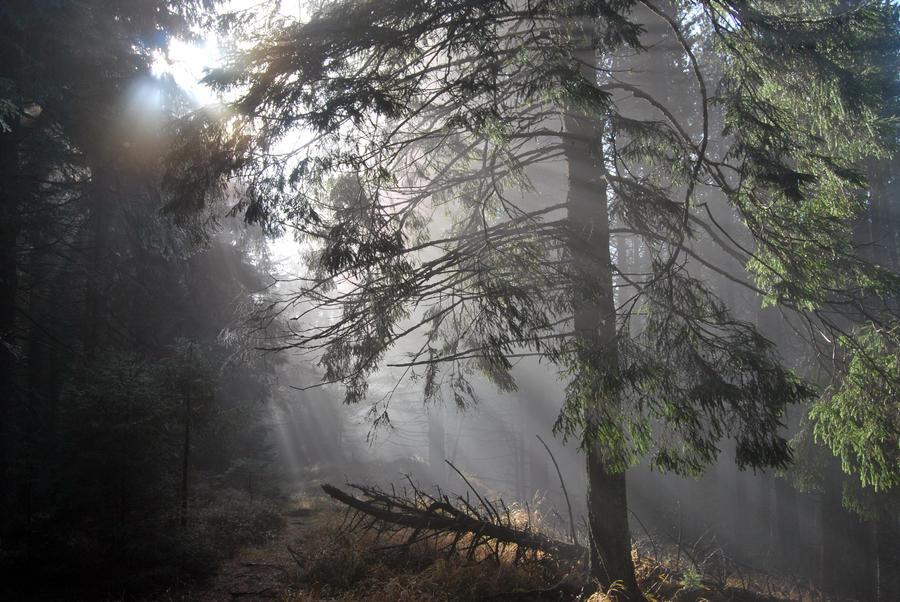 idée Photos ! Enchanted_forest_by_iuliii