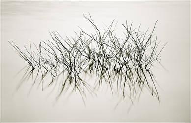 Balance by MaciejKarcz