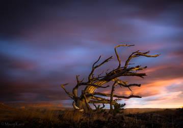 Windswept by MaciejKarcz