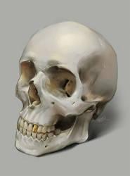 Skull by superschool48