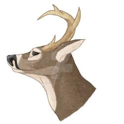 White Tailed Deer Headshot