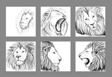 Lion Head Practice