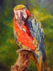 Harry - macaw by karolinabor
