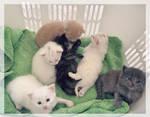 Kittens [ 1 ]