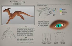 Methy: Basic Drake Anatomy