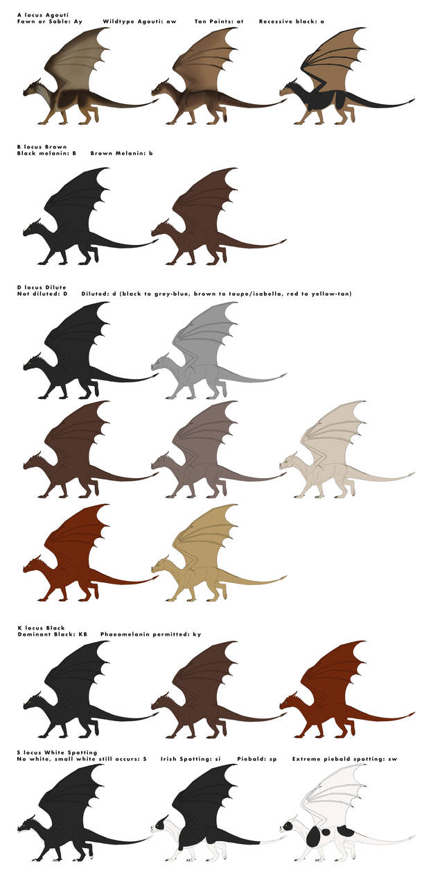 Dragon Base Colors