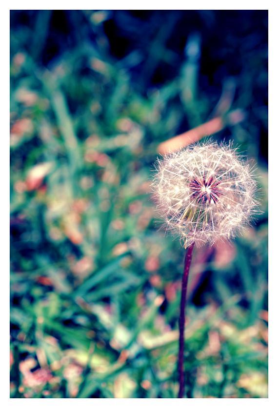 Dandelion Blues by MakesMeLaugh