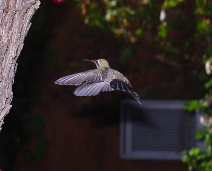 Strong Bird