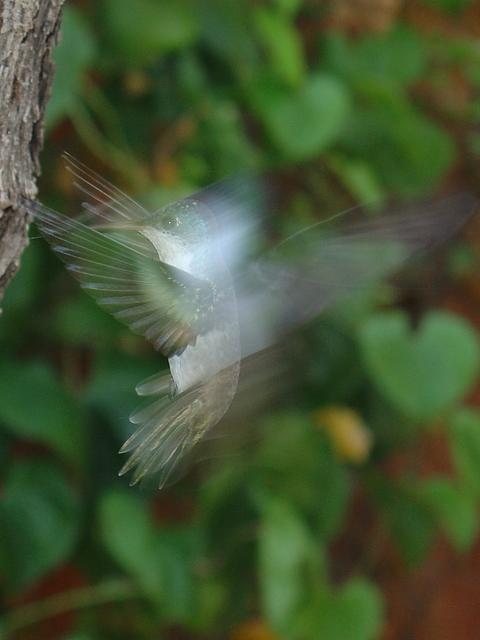Smudge Bird