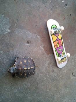 Carls board
