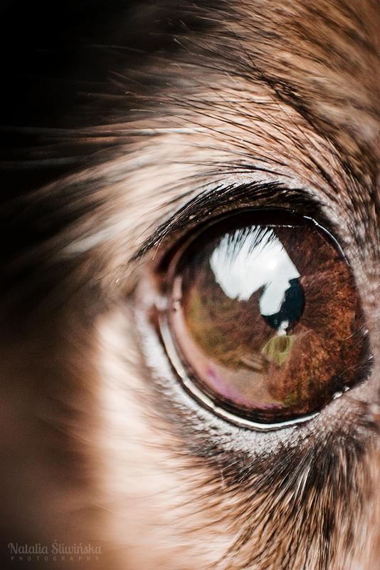 Big eye by chaoticfireflies