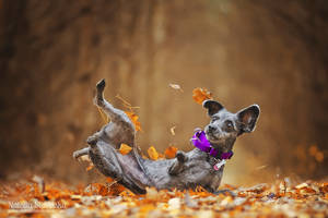 Rolling in the leaves