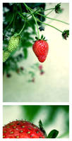 strawberry fields forever II