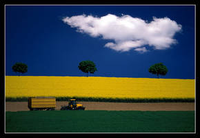 yellow, green, blue by macro-art
