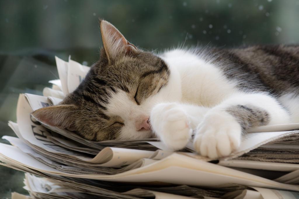Dream Well My Paper Girl by zantri