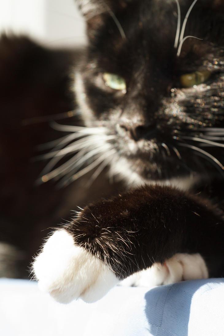 Take my paw by zantri