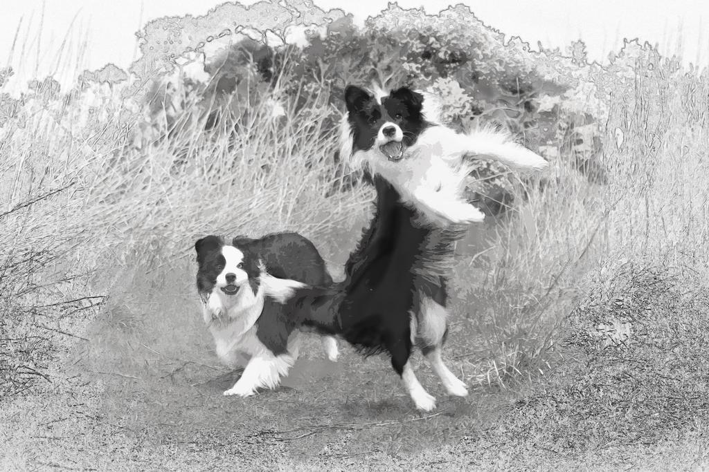 Dancing Dog by zantri
