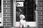 Our dog Emma by jolle-pe