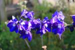 Flower stock 004