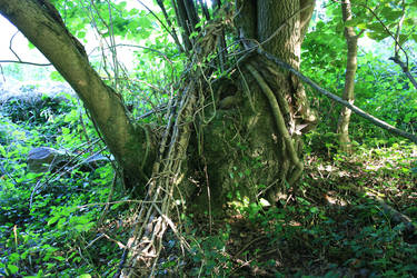 Sherborne Woods preview 2