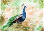 Peacock (2009)