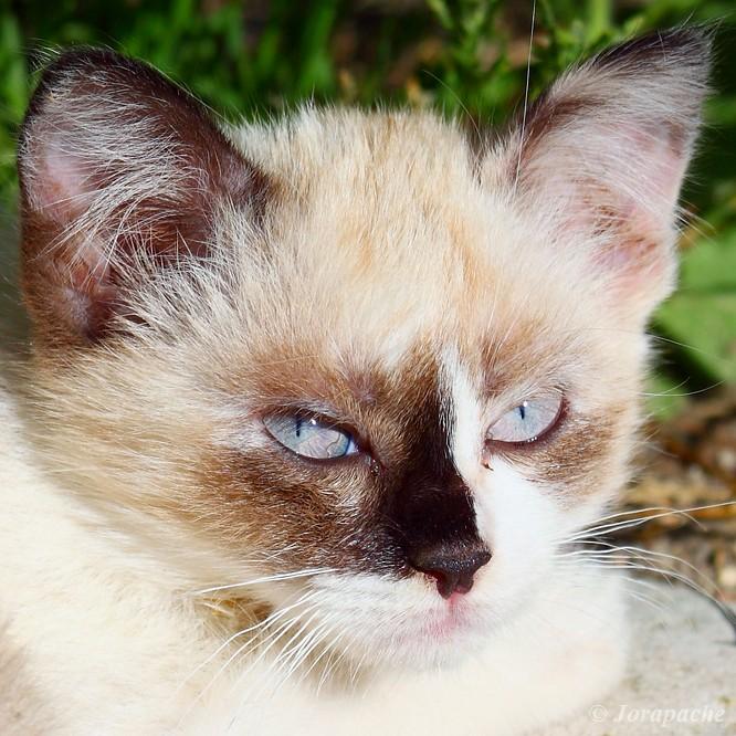 Kitten face III by Jorapache