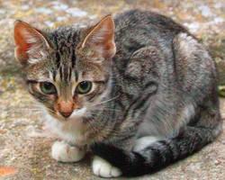 Shy kitty