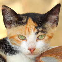Cat face by Jorapache