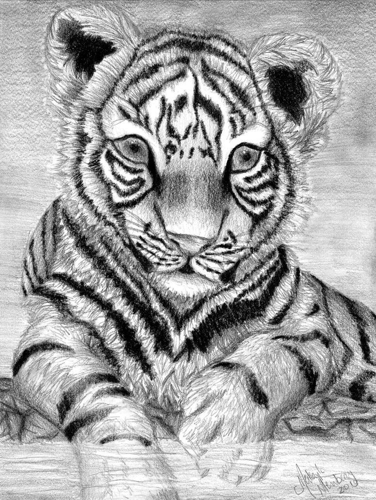 Baby Tiger by ssdancer on DeviantArt
