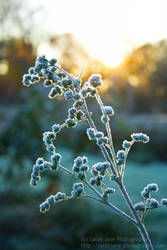 Untitled Frost IV