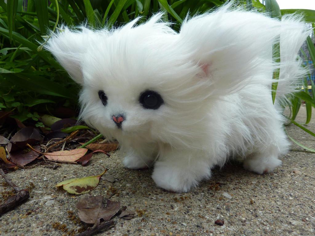 Where Can I Buy A Munchkin Cat