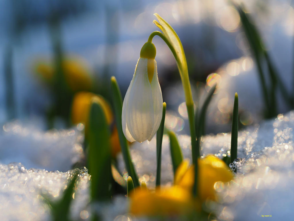 spring fever by Spatzenwolke