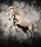 Lester the Lusitano Stallion. by SamanthaDawn1