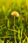 Flower by Kapaska