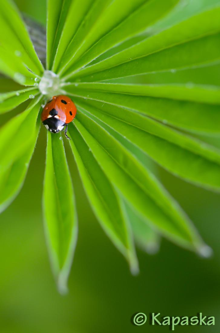 Lonely Ladybug by Kapaska