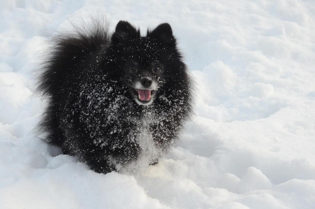 Snowy dog by Kapaska