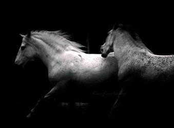 .725 by Equuskath
