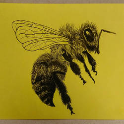 Bumblebee by cwaltrick
