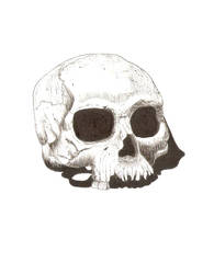 Skull drawing by cwaltrick