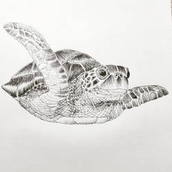 Turtle drawing by cwaltrick